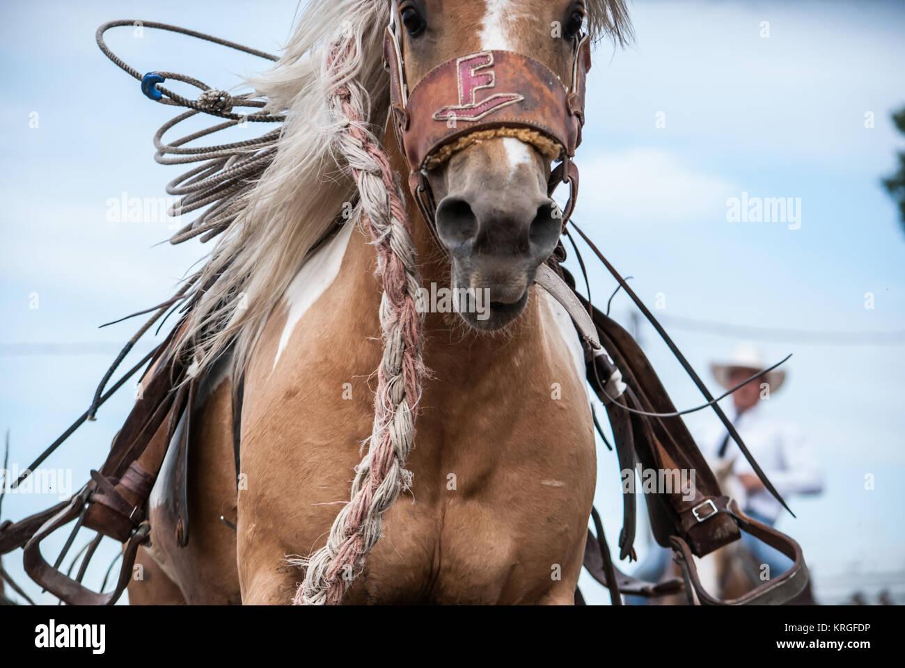 Paint Ranch Bronc - Stock Image