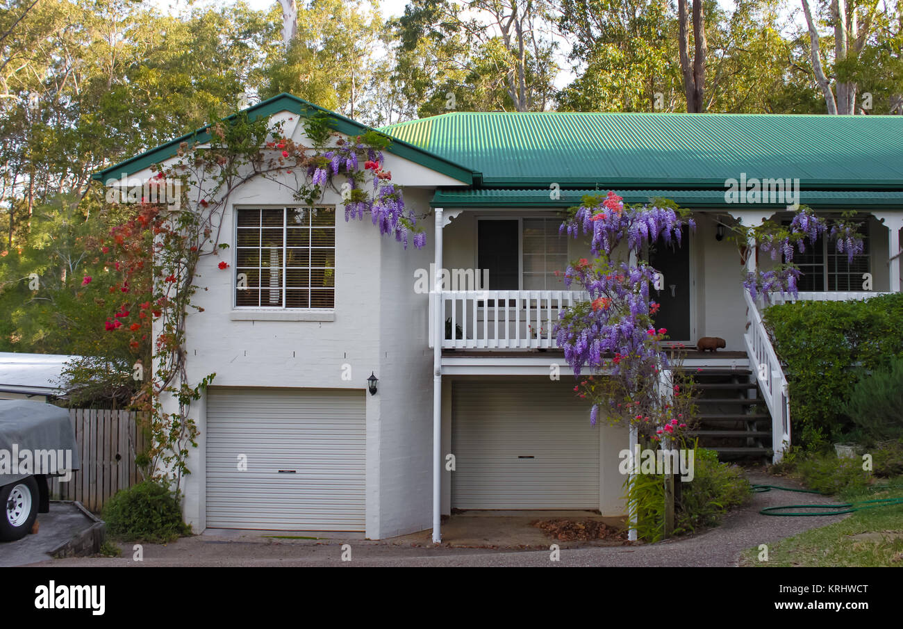 Suburban house near Brisbane Australia with wisteria growing over the stairs and porch and tall gum trees behind - Stock Image
