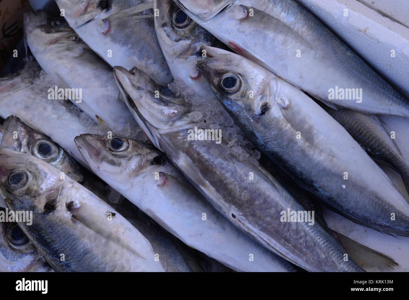 Charmant Fisch, Fische, Markt, Fischmarkt, Nahrung, Essen, Lebensmittel, Küche,  Eiweiß, Eiweißreich, Ernährung, Fischerei, Fischfang, Fischwirtschaft