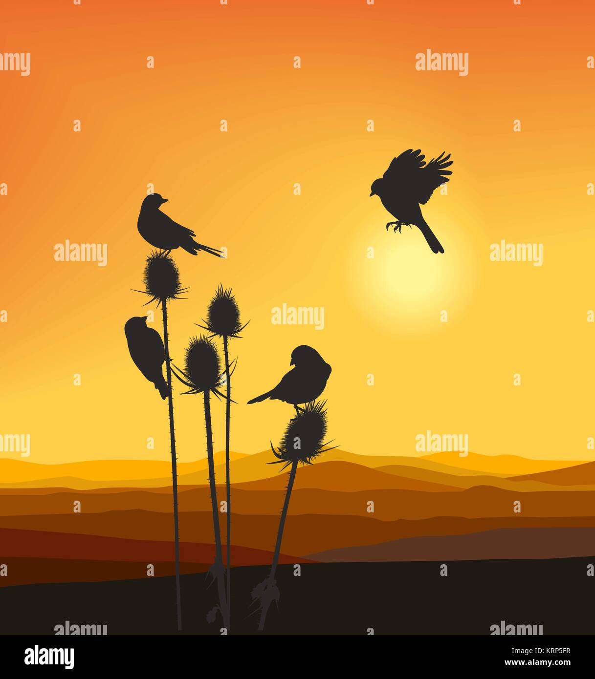 Small birds on a thistle - Stock Image