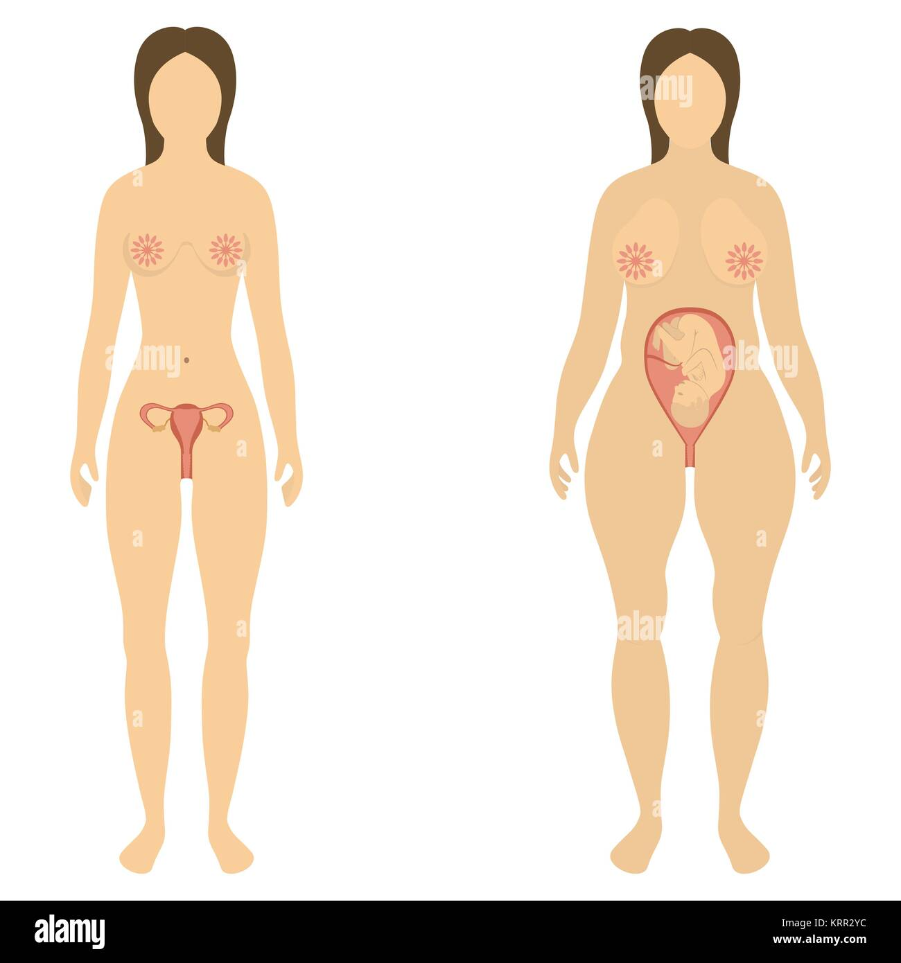 The woman before and during pregnancy - vector illustration - Stock Vector