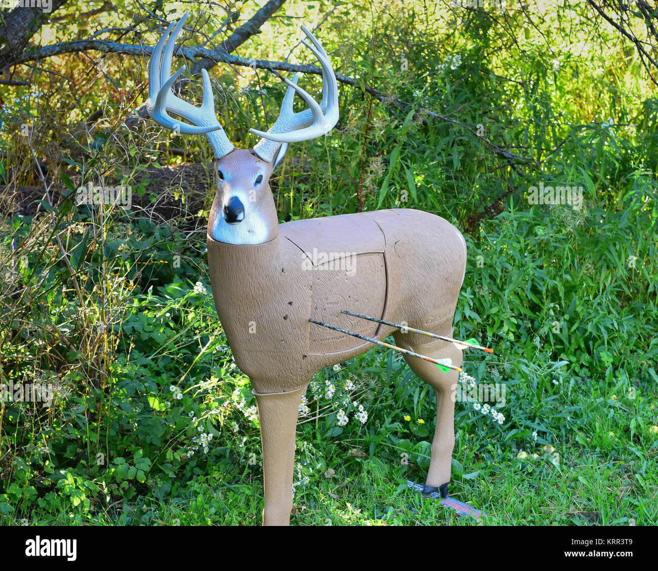 A whitetail deer 3-D life size archery target in a field with two arrows stuck in the deer's chest. - Stock Image