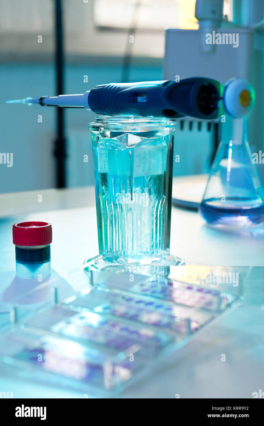 Histochemical staining of tissue samples. Automatic pipette, dye and slide glasses in a coplin jar. Plastic box - Stock Image