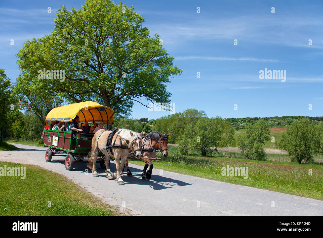 Horse-drawn carriage on a the way from village Kloster to village Grieben, island Hiddensee, Mecklenburg-Western - Stock Image