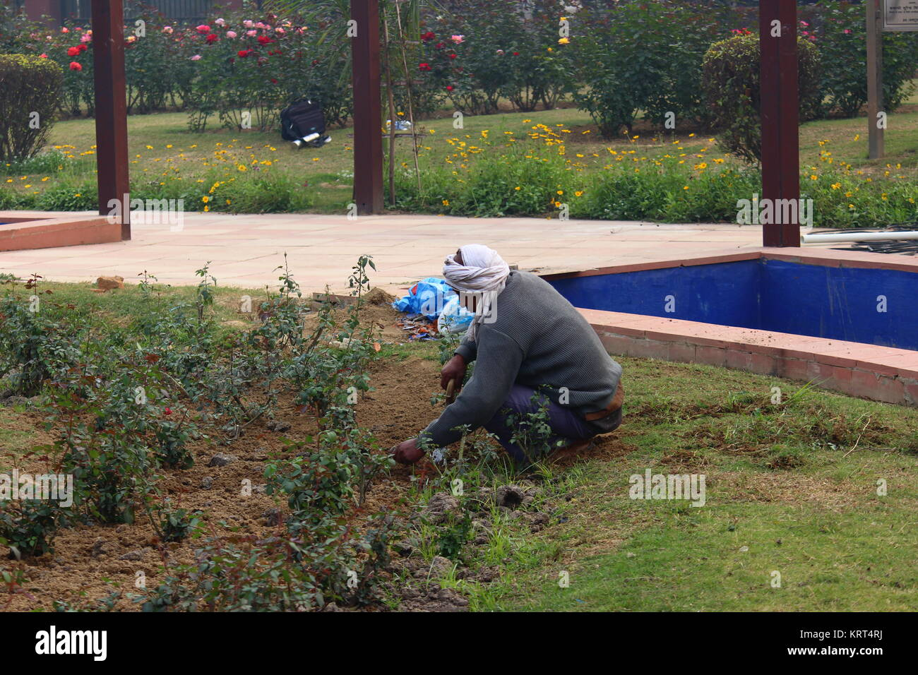 Adult Indian Male Gardener In National Rose Garden New Delhi India Stock Photo Alamy