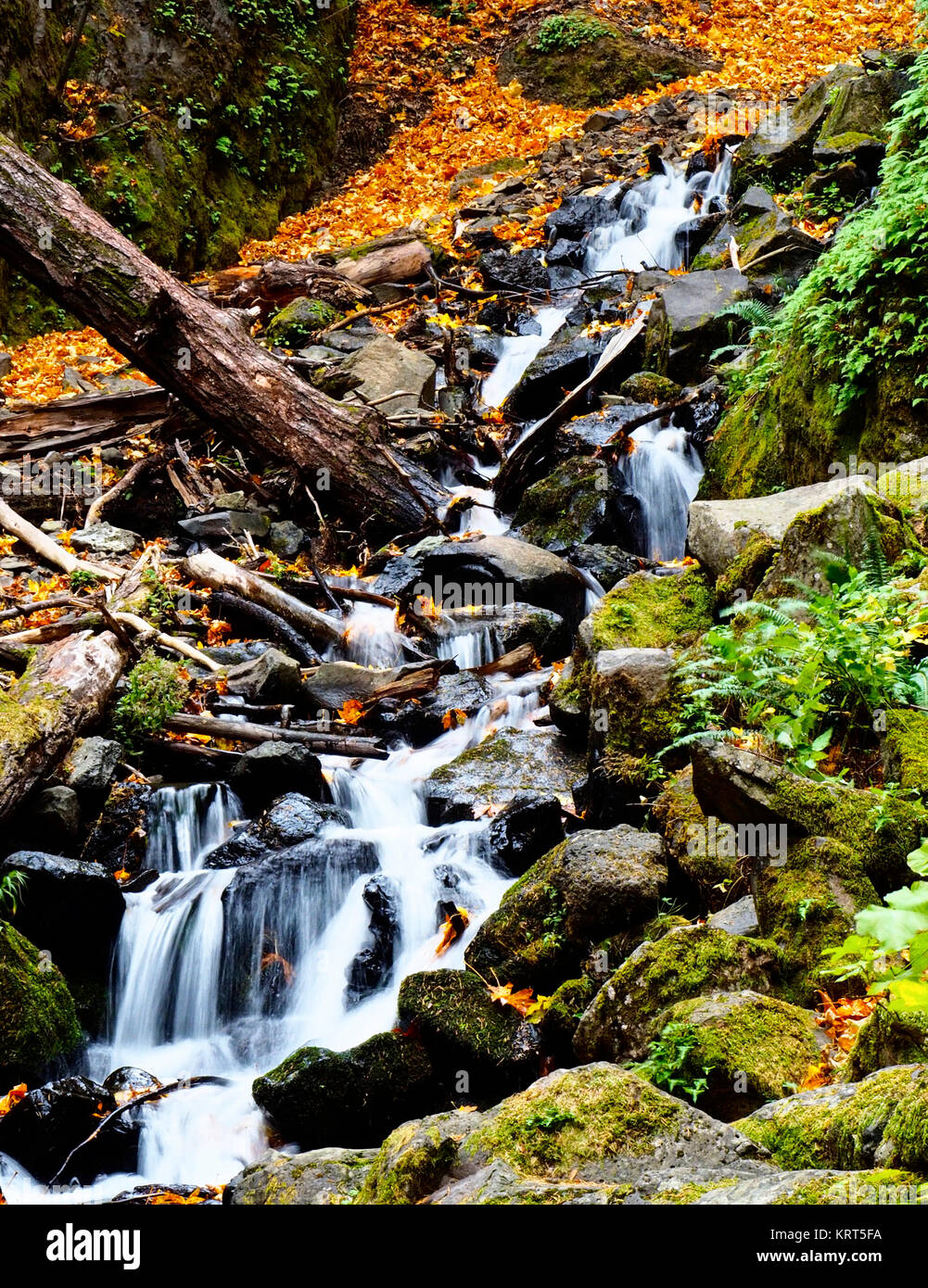 Waterfall at Starvation Creek State Park, Oregon, in autumn. - Stock Image