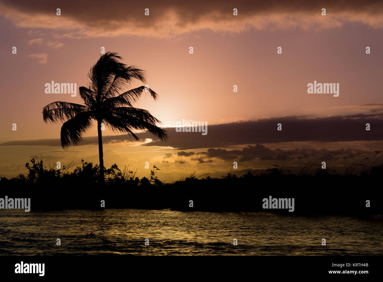 Coconut-tree palm silhouette and sunset over the river Stock Photo