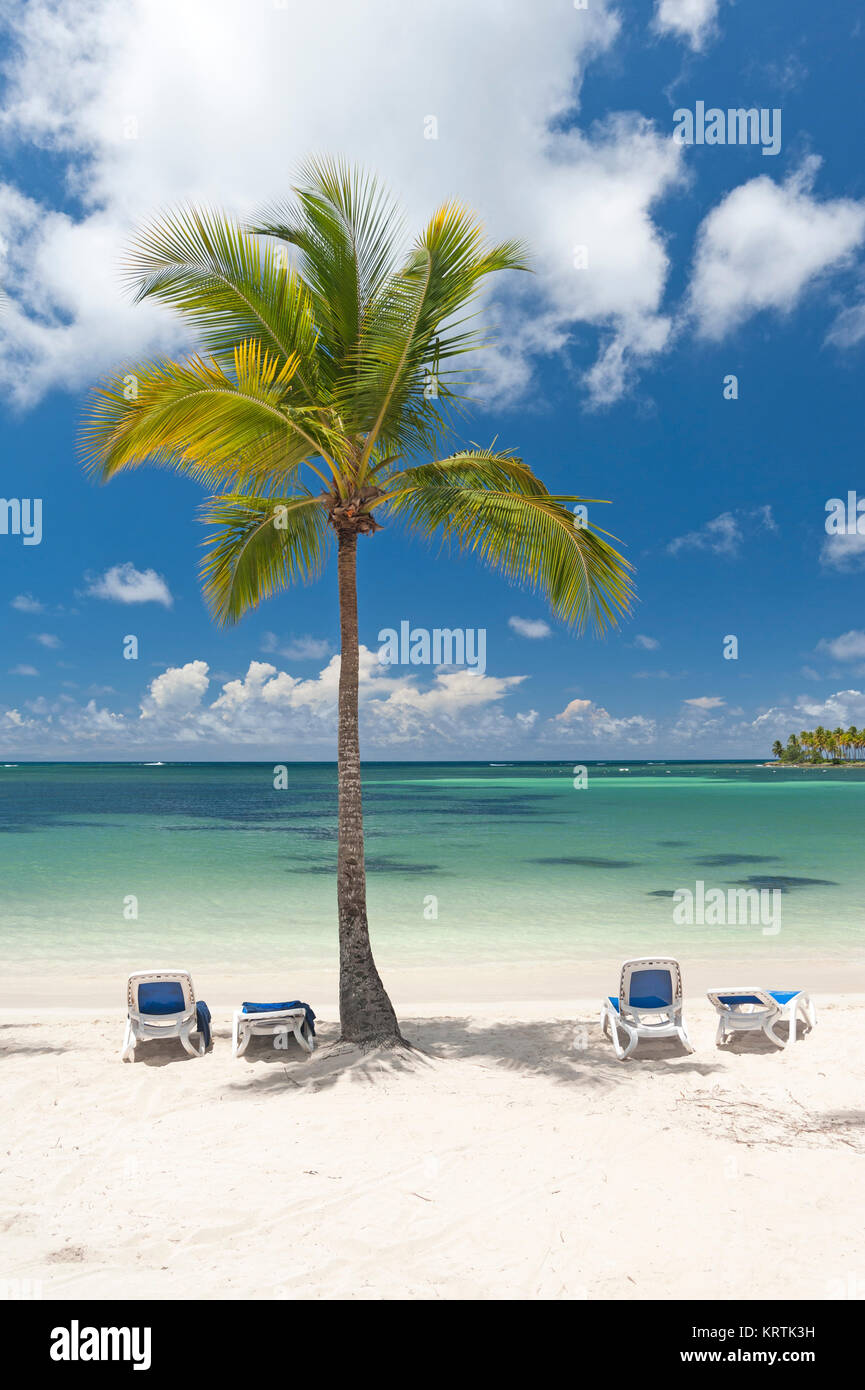 Coconut tree with deck chairs on Tropical beach in the Caribbean - Stock Image