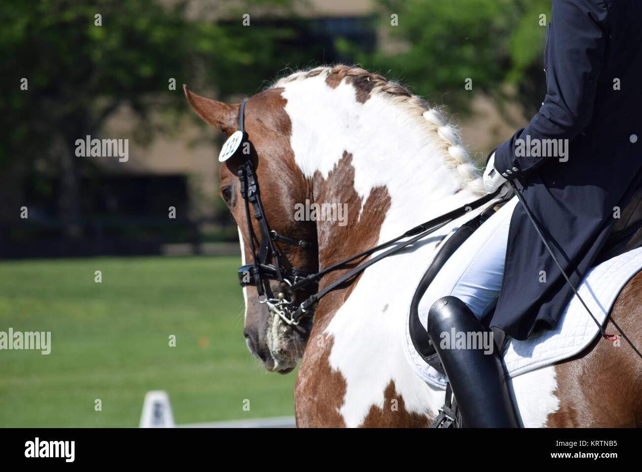 Dressage Horse High Resolution Stock Photography And Images Alamy