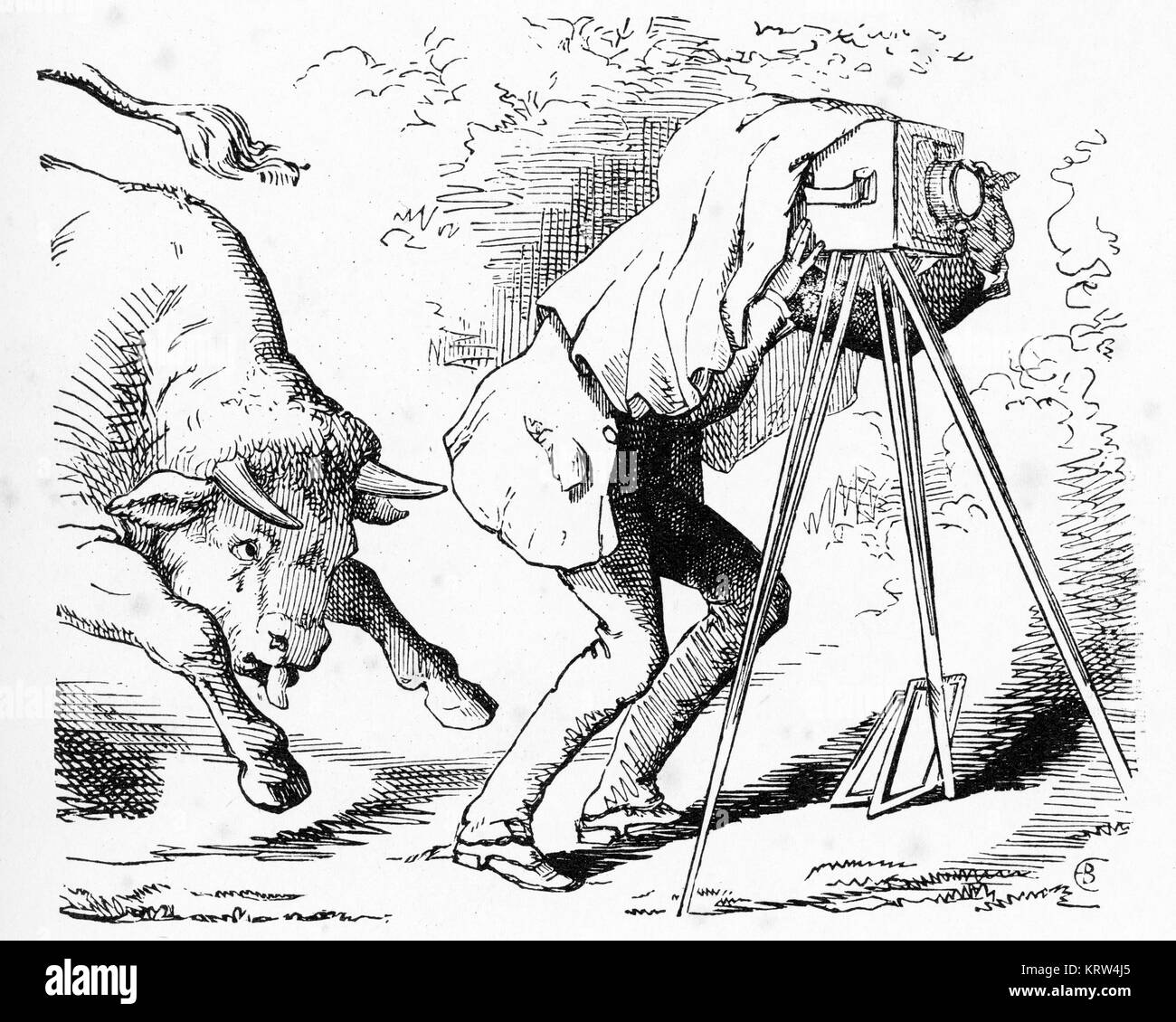 Engraving of a Victorian-era photographer about to be attacked by a bull. From Punch Magazine - Stock Image