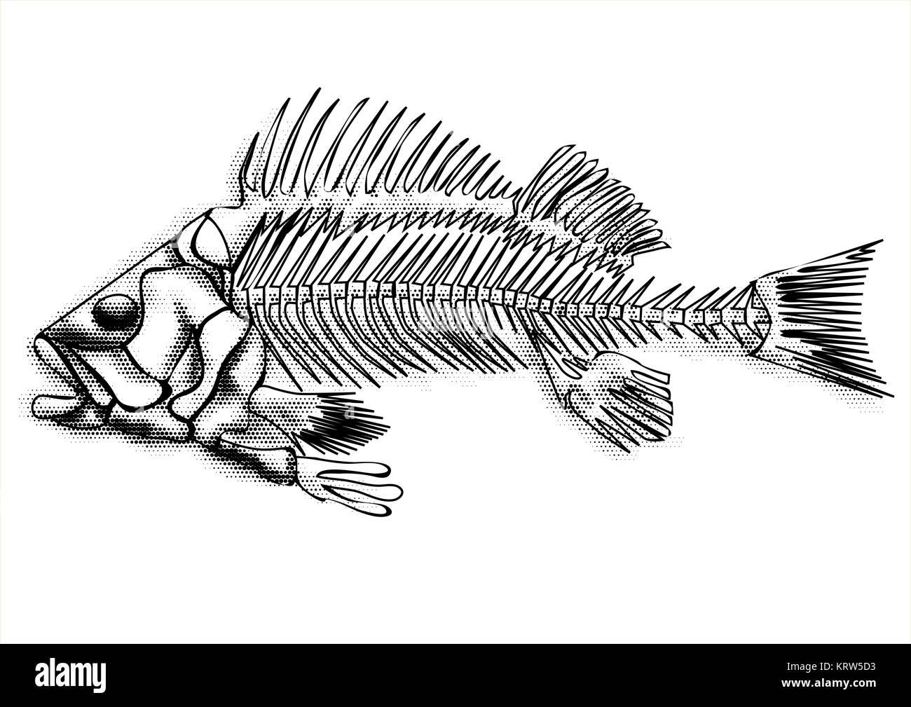 black fish skeleton - Stock Image