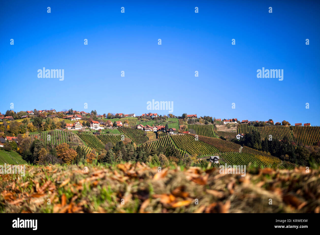 Vineyard on Schilcher wine route with some traditional old huts in western Styria, Austria - Stock Image