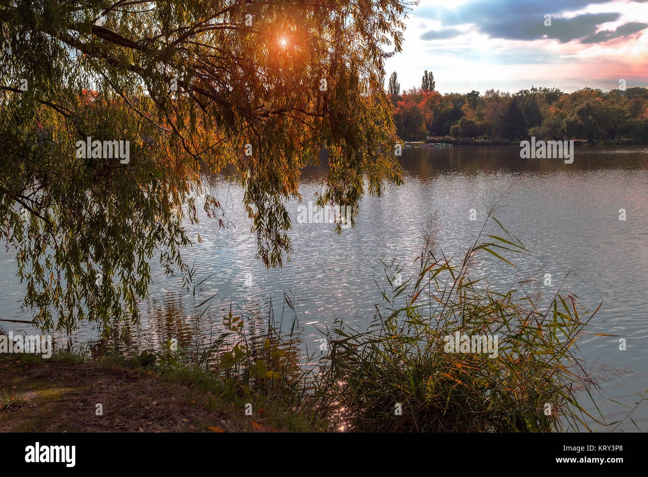 Evening landscape with a lake, trees and sun glare. Sunset above lake. The nature of Hungary - Stock Image