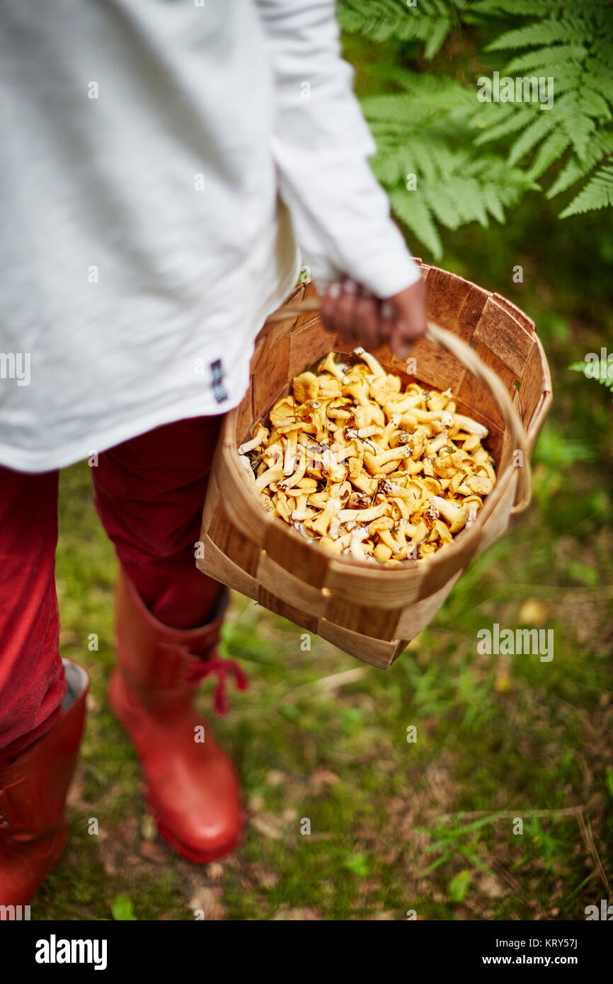 Boy with a basket of mushrooms - Stock Image