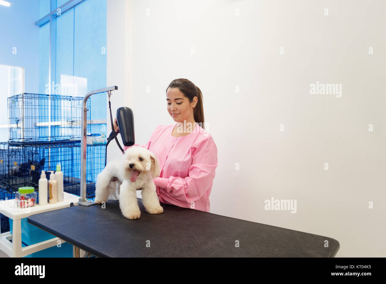 Young woman working in pet shop, brushing and drying dog hair, girl grooming puppy for beauty in store. People, Stock Photo