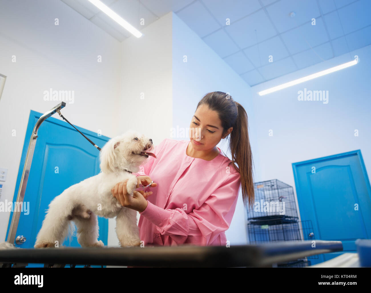 Young woman working in pet shop, trimming dog hair, girl grooming puppy for beauty in store. People, jobs, professions - Stock Image
