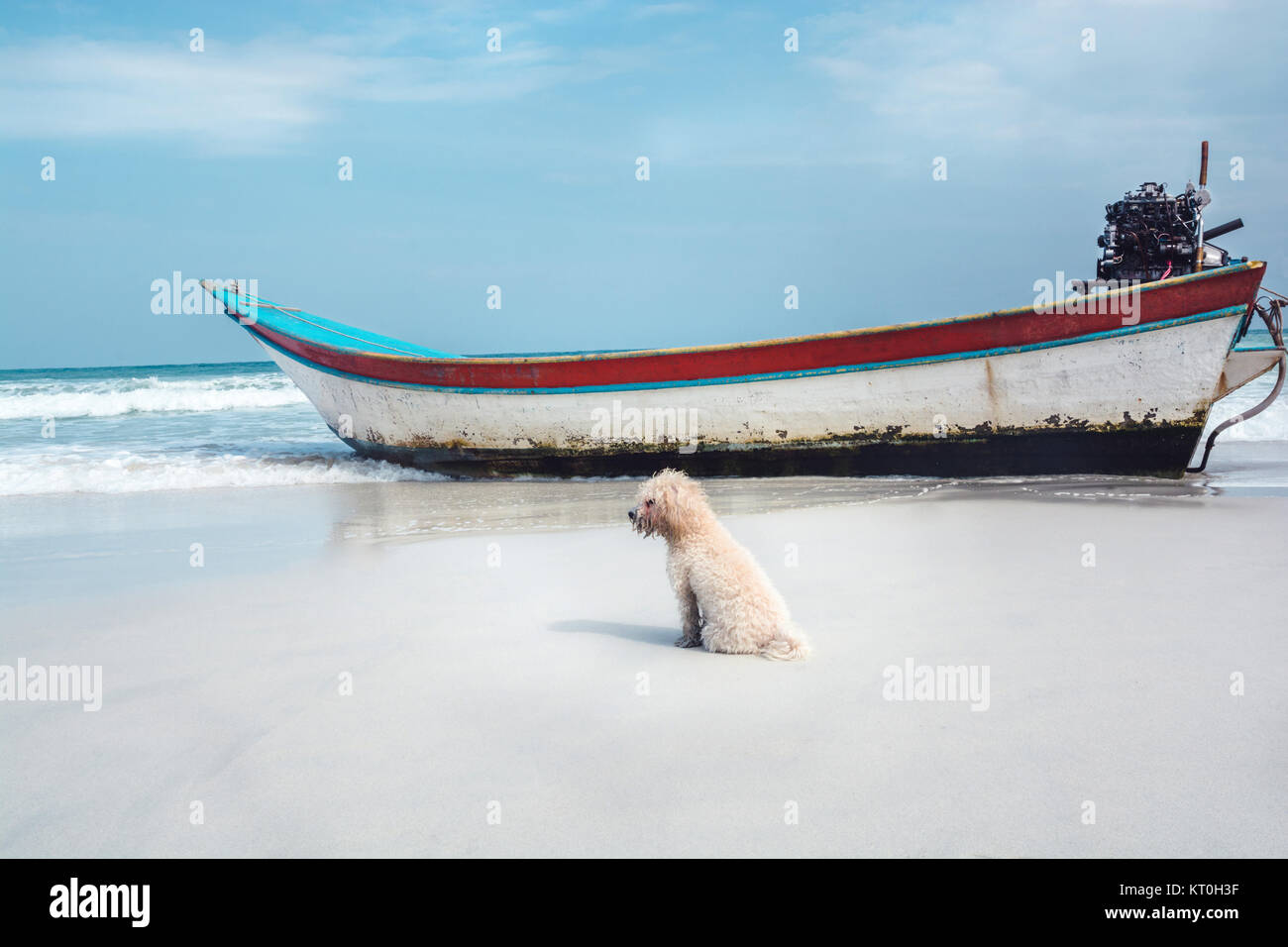 A small poodle dog sitting on a sandy beach next to a boat in Thailand, looks very out of context. - Stock Image