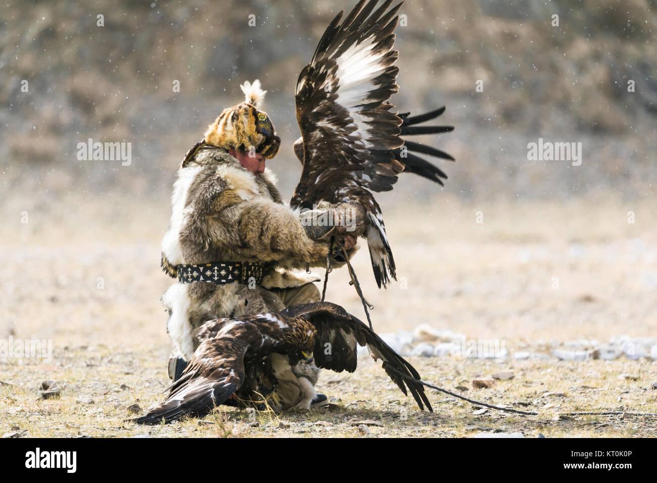 Kazakh eagle hunter with eagles - Stock Image