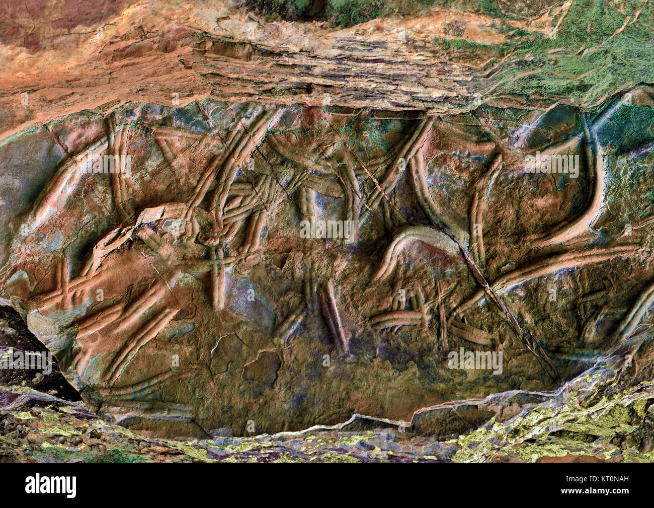 Stone craved trilobite  fossils in a rock Stock Photo