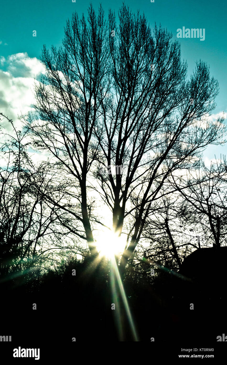 silhouette of a tree and sun flare from behind it - Stock Image