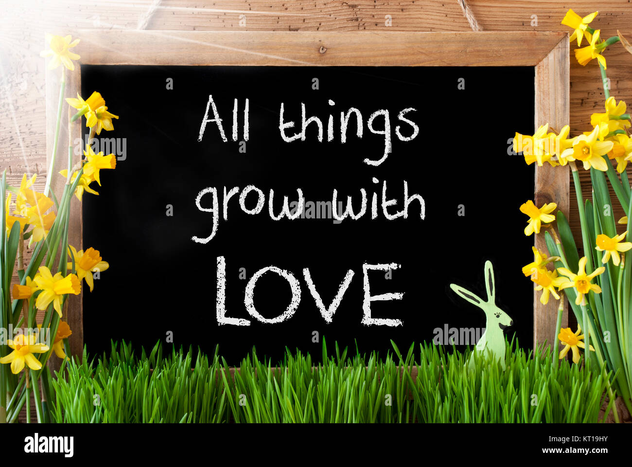 Blackboard With English Quote All Things Grow With Love. Sunny Spring  Flowers Nacissus Or Daffodil