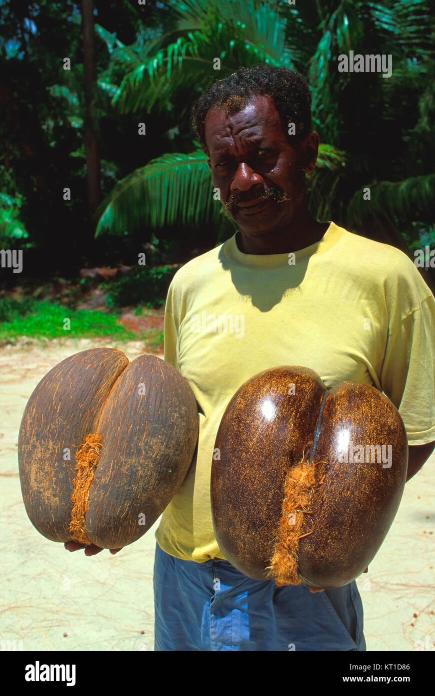 Coco de Mer, Praslin island, Seychelles - Stock Image