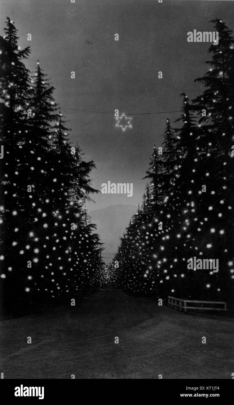 Christmas Tree Lane Altadena W987 Stock Photo 169681796 Alamy
