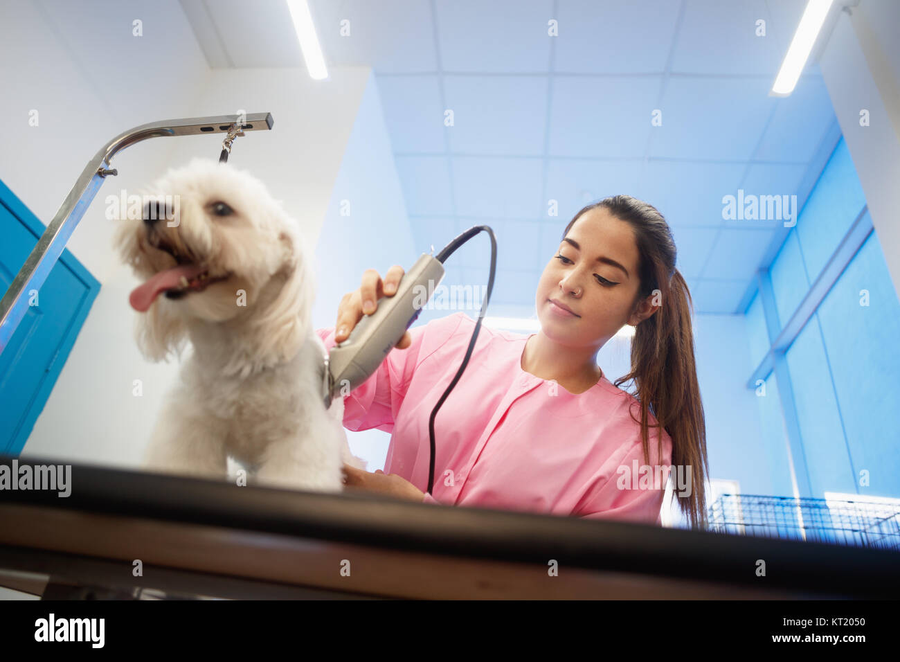 Young woman working in pet shop, trimming dog hair with clipper, girl grooming puppy for beauty in store. People, Stock Photo