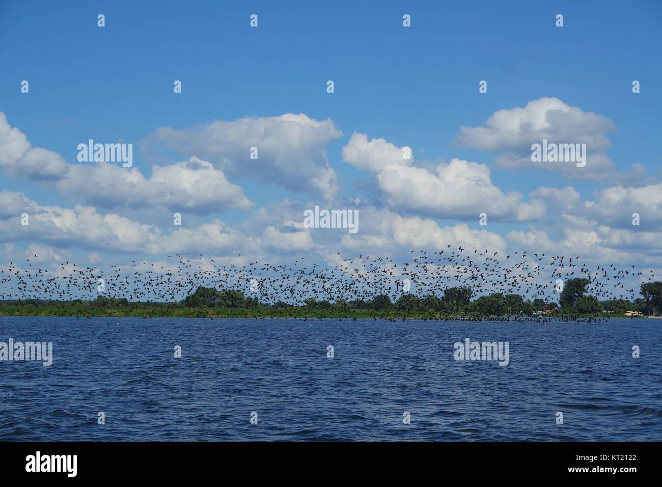 cormorants on the lake - Stock Image