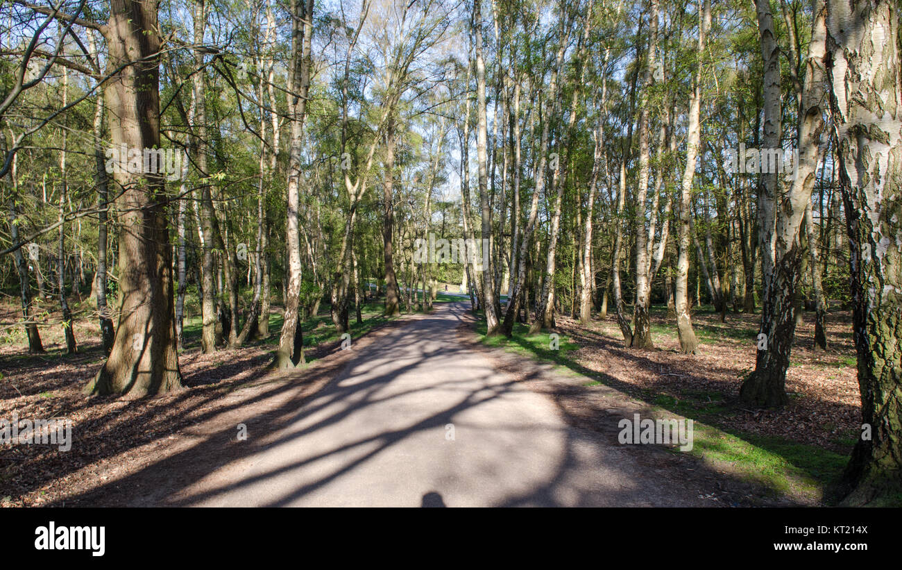 Afternoon sun casts long shadows from trees over a footpath through woodland at Virginia Water, beside Windsor Great - Stock Image