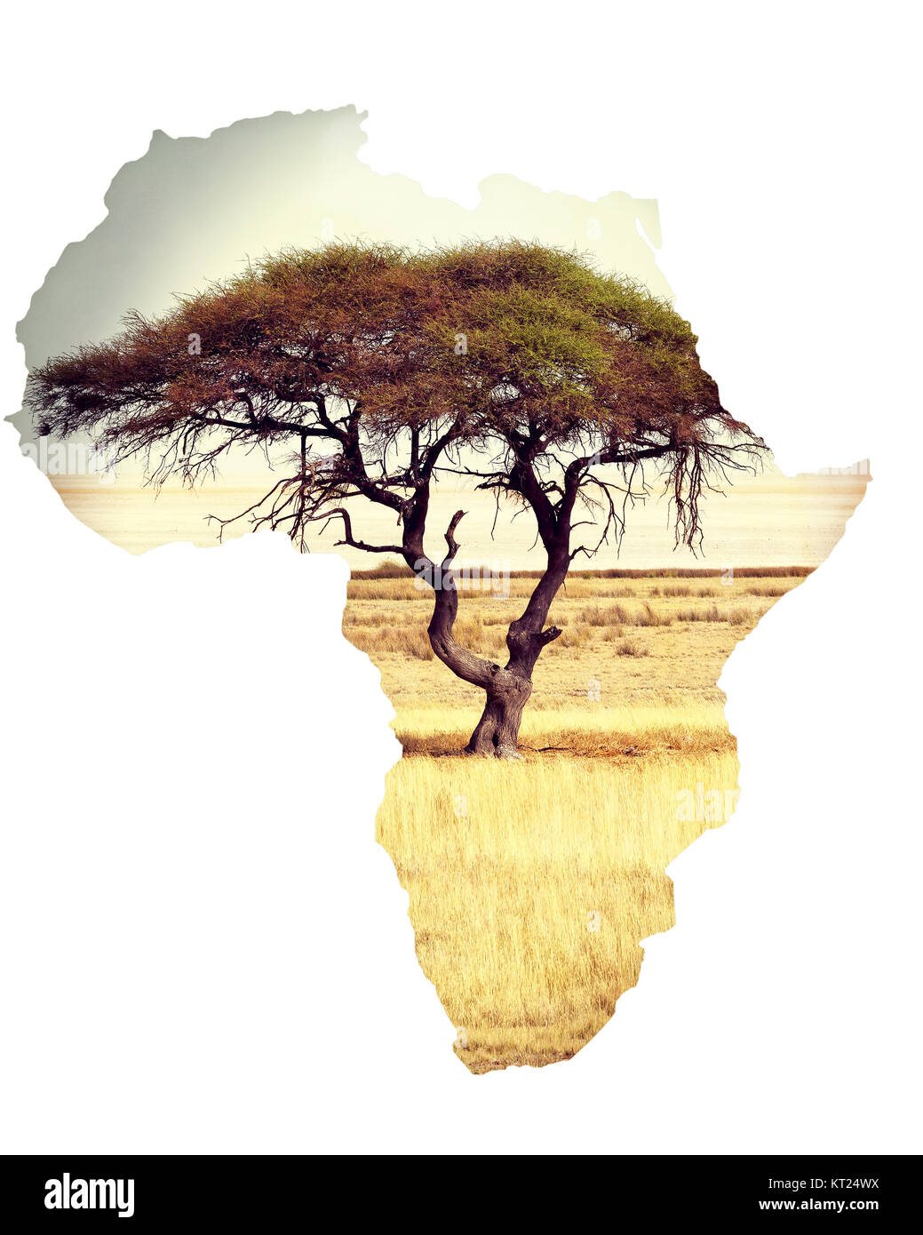 Map of africa continent concept with acacia Stock Photo