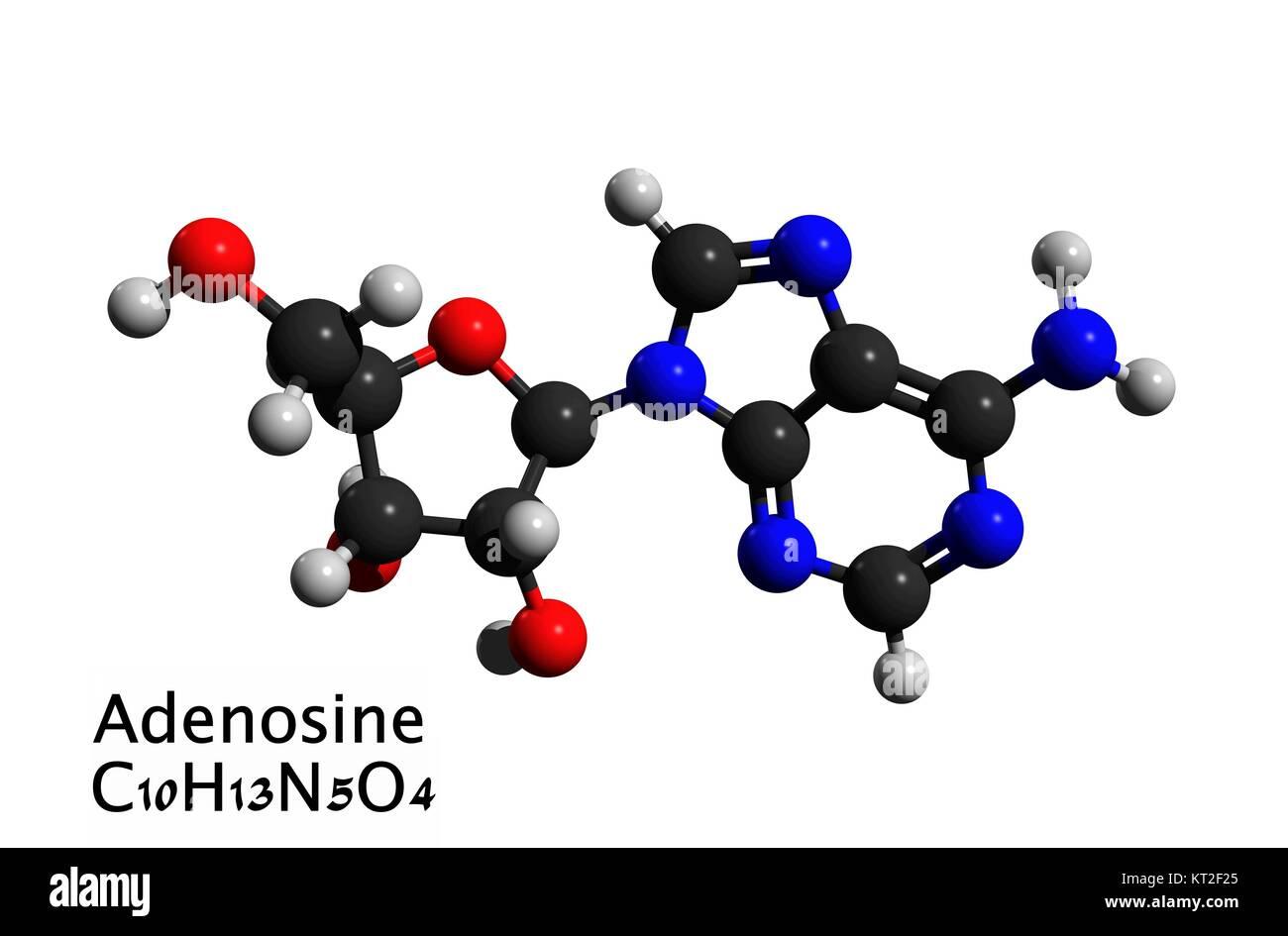 Molecular structure of adenosine (a purine nucleoside), neuromodulator, medication, 3D rendering - Stock Image