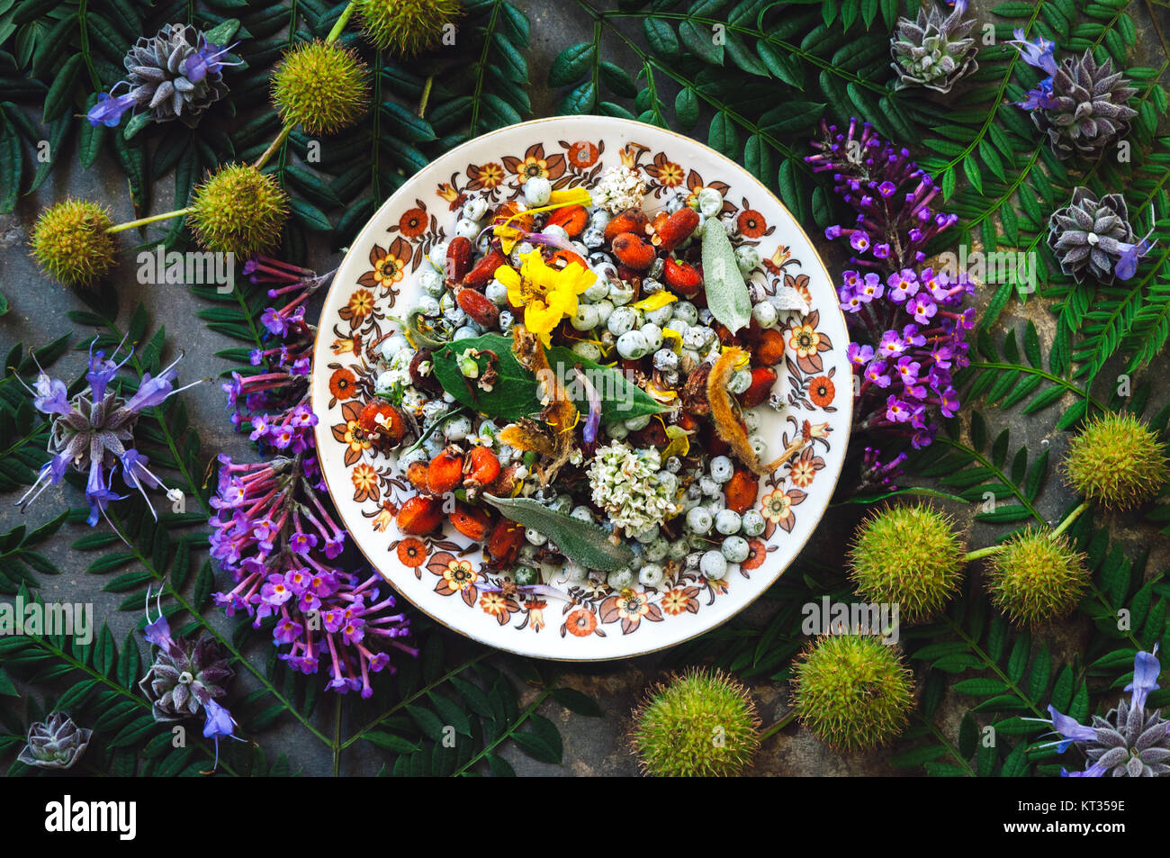 Mixed Flowers and Seeds on a Bed of Flora - Stock Image