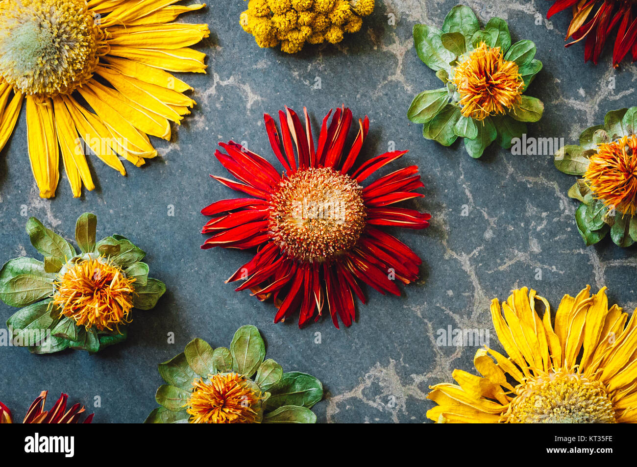 Dried Daisies and Assorted Flowers - Stock Image
