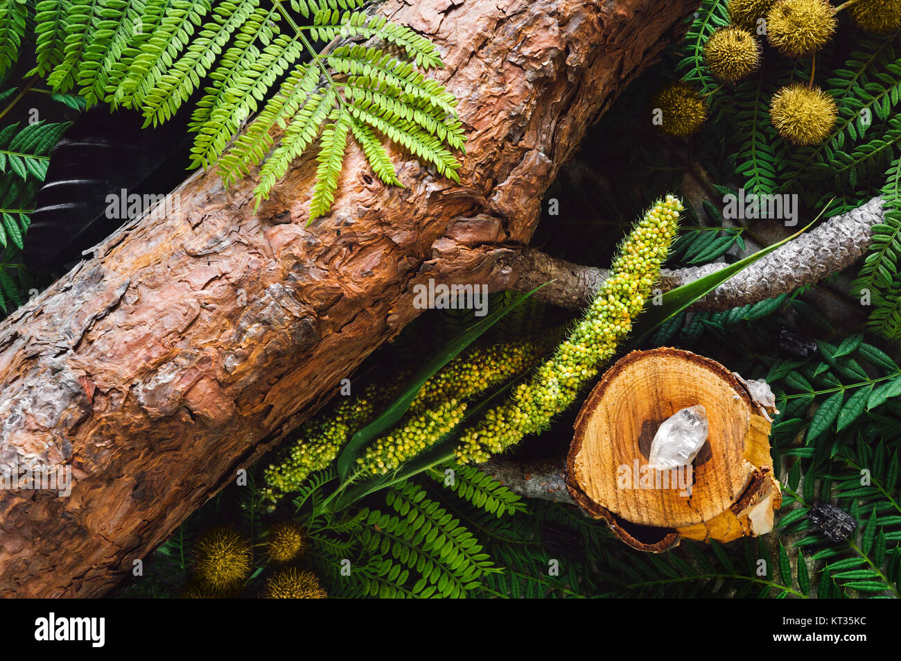 A Collection of Wood, Botanicals and Crystals. - Stock Image