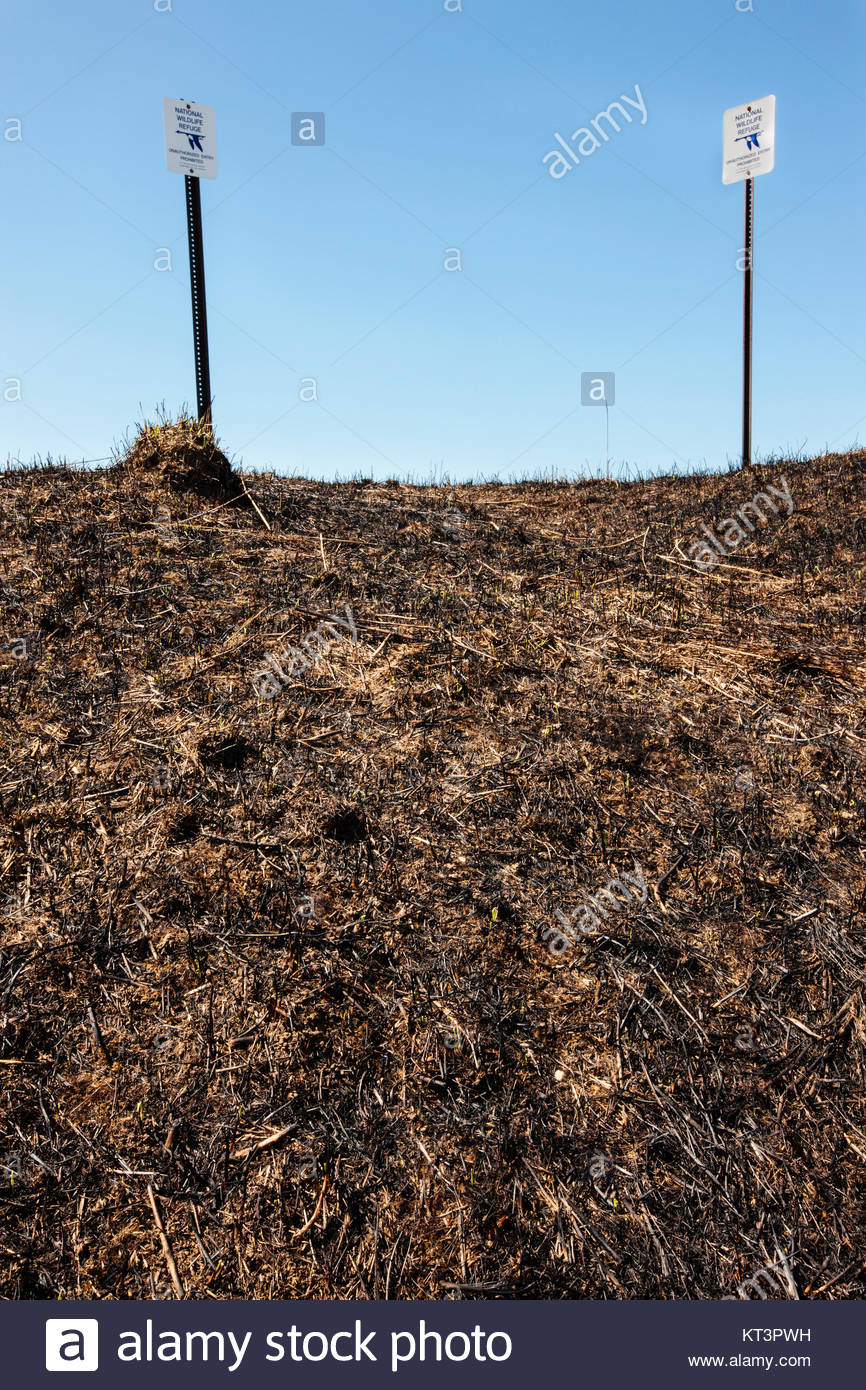 A controlled burn recently took place on this field within the Horicon National Wildlife Refuge, in Wisconsin in - Stock Image
