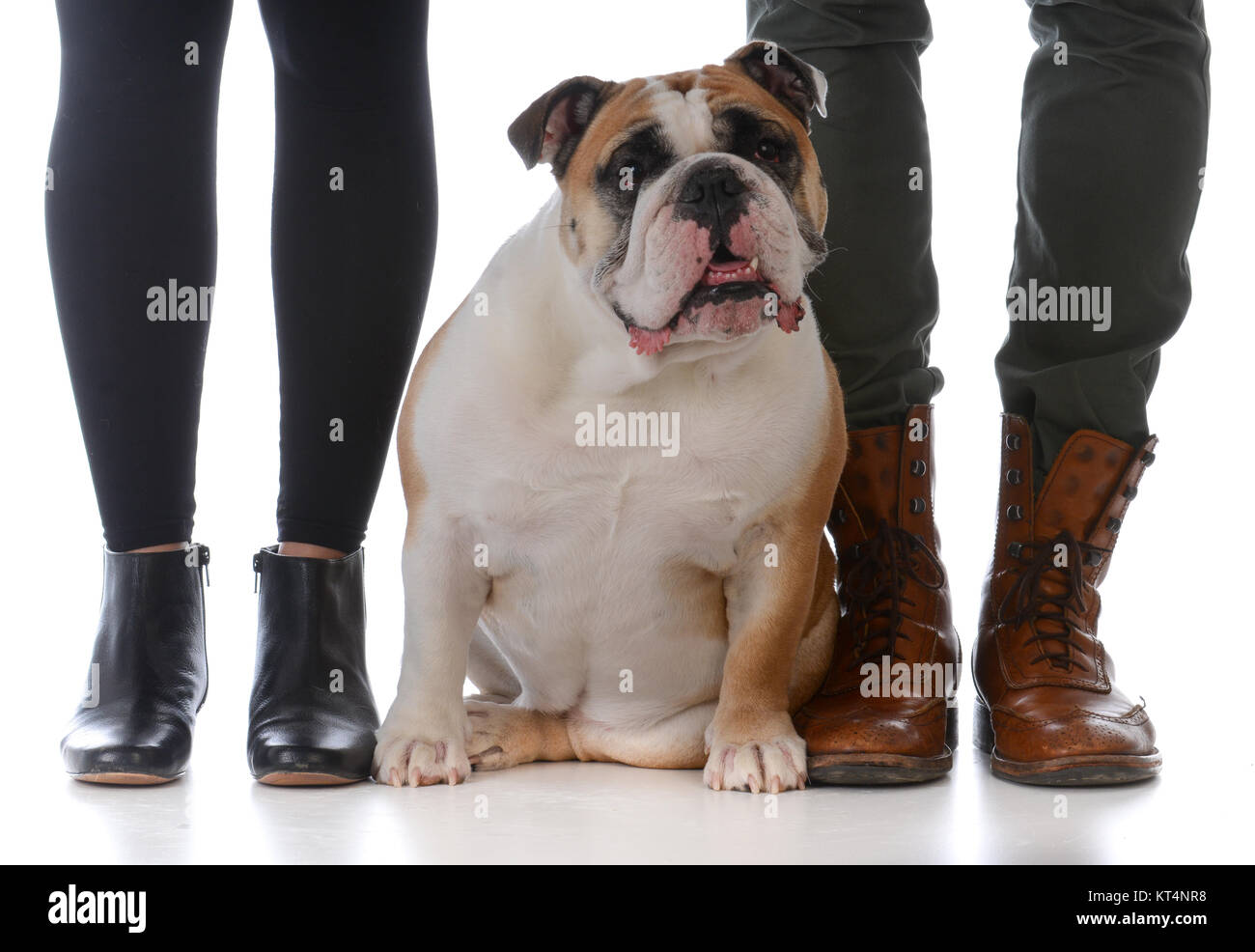 husband and wife with their bulldog on white background - Stock Image