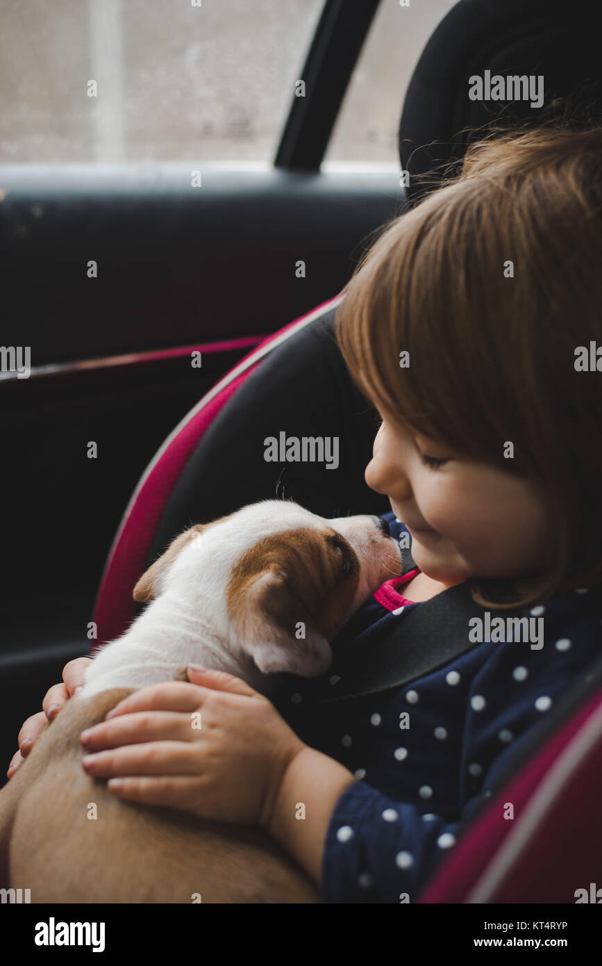 A toddler and a 6 week old pit bull beagle mix share a kiss while riding in a car. Stock Photo