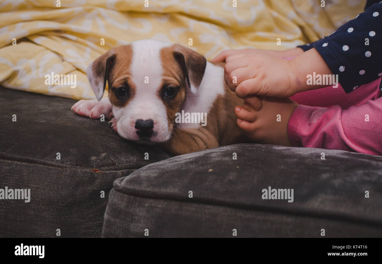 A sleepy puppy sits at the feet of a child. - Stock Image