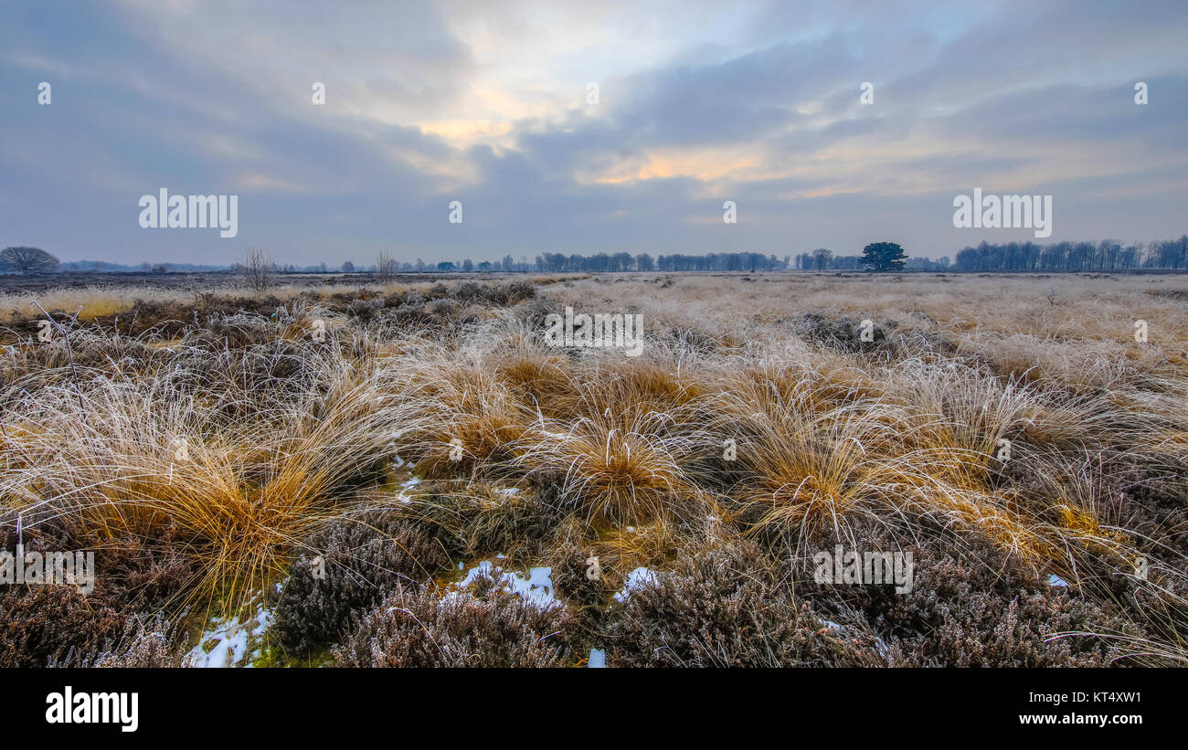 Winter morning sunrise over tussock sods with hoarfrost in balloerveld nature reserve with frosty heathland - Stock Image
