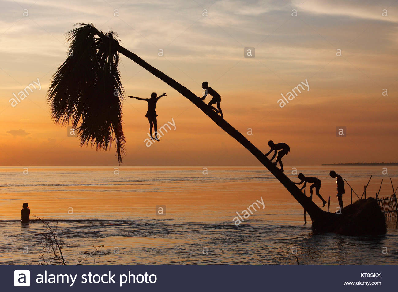 Kids are having childhood fun in Padma River at Mawa, They are climbing on a coconut tree at the shore and jumping - Stock Image