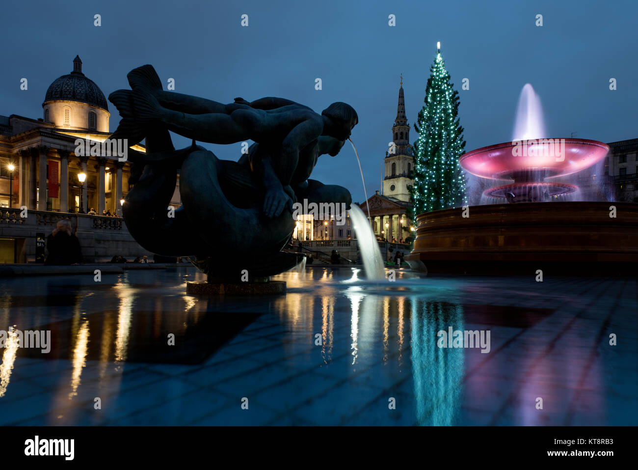 London, UK. 21st December, 2017. The Trafalgar Square Christmas tree is a Christmas tree donated to the people of - Stock Image