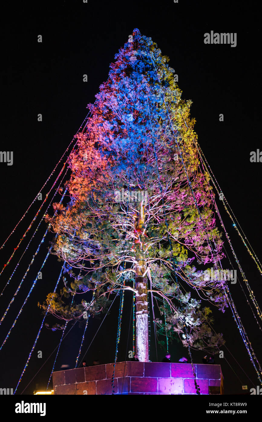 the worlds tallest christmas tree from a project by seijun nishihata - Worlds Tallest Christmas Tree