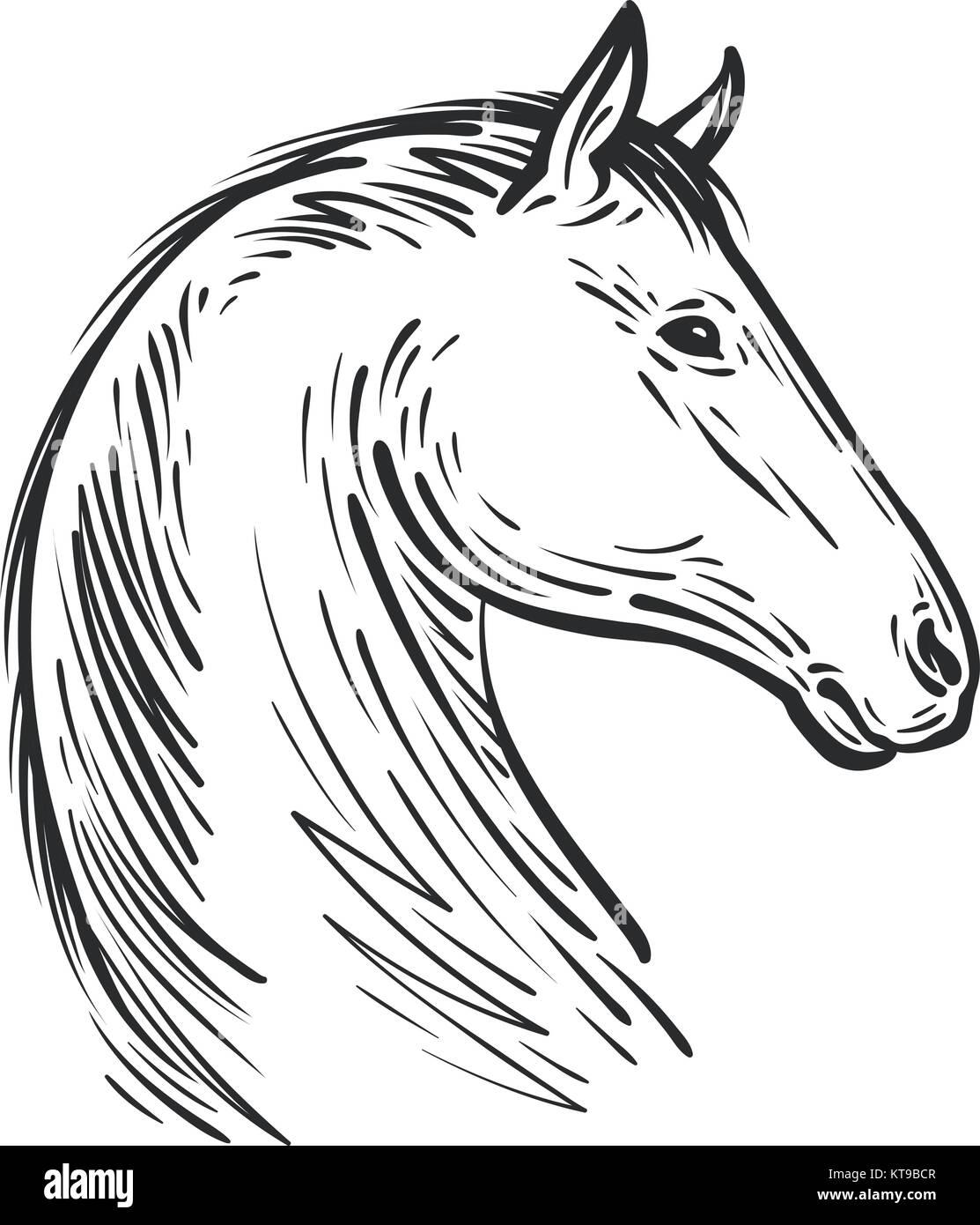 Horse sketch. Farm animal, steed vector illustration - Stock Vector