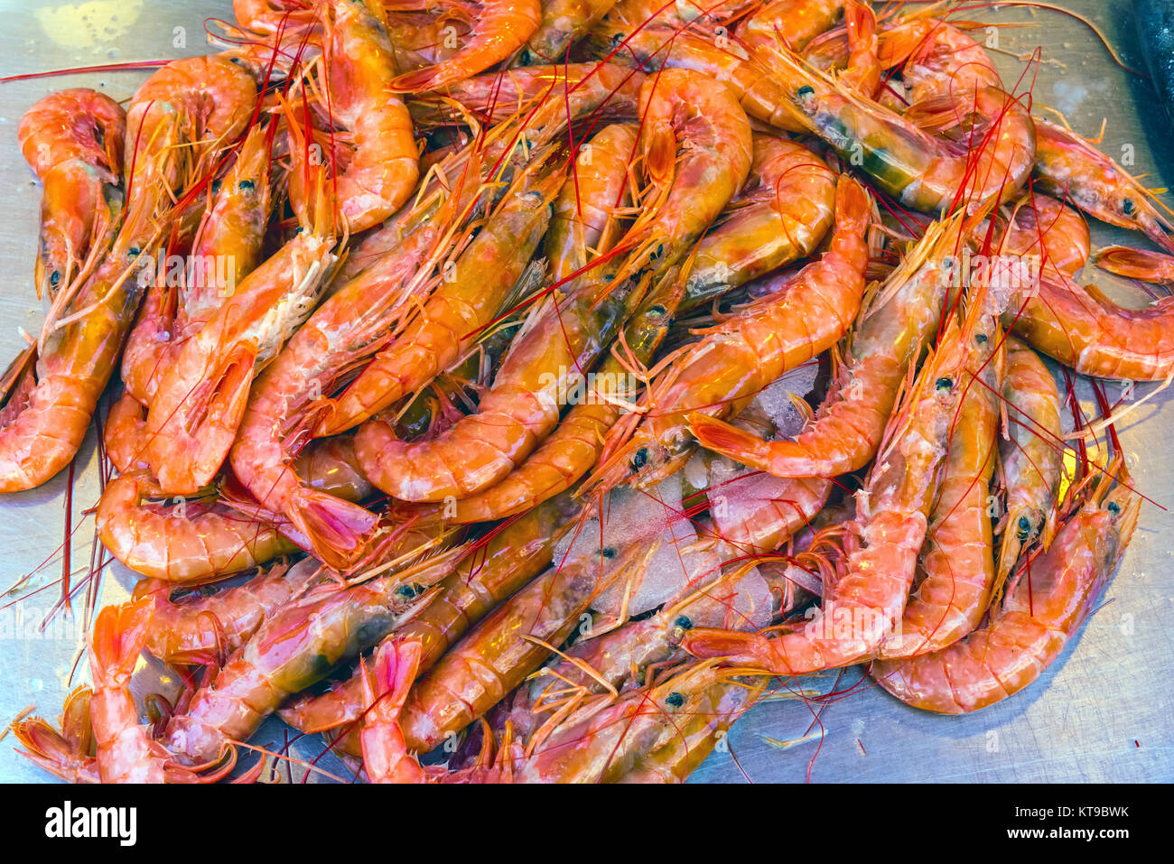 fresh shrimp at a market in palermo,sicily - Stock Image