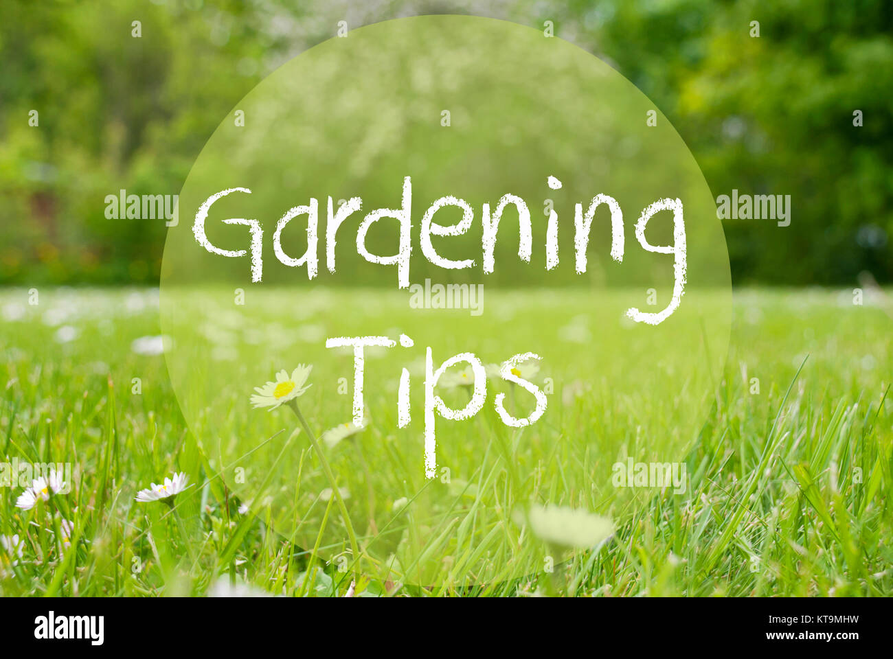 English Text Gardening Tips  Spring Or Summer Gras Meadow With Daisy