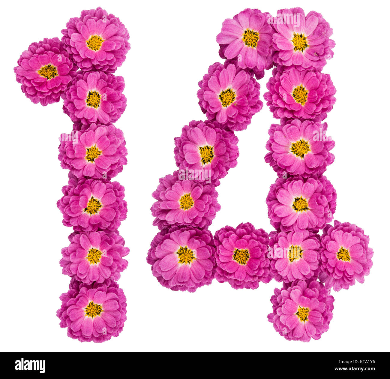 Arabic numeral 14, fourteen, from flowers of chrysanthemum, isolated on white background Stock Photo