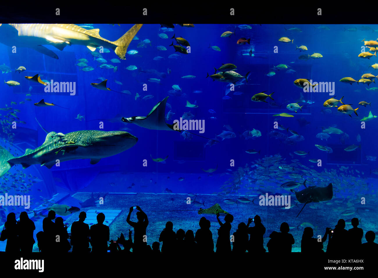 Kuroshio Sea main tank Stock Photo