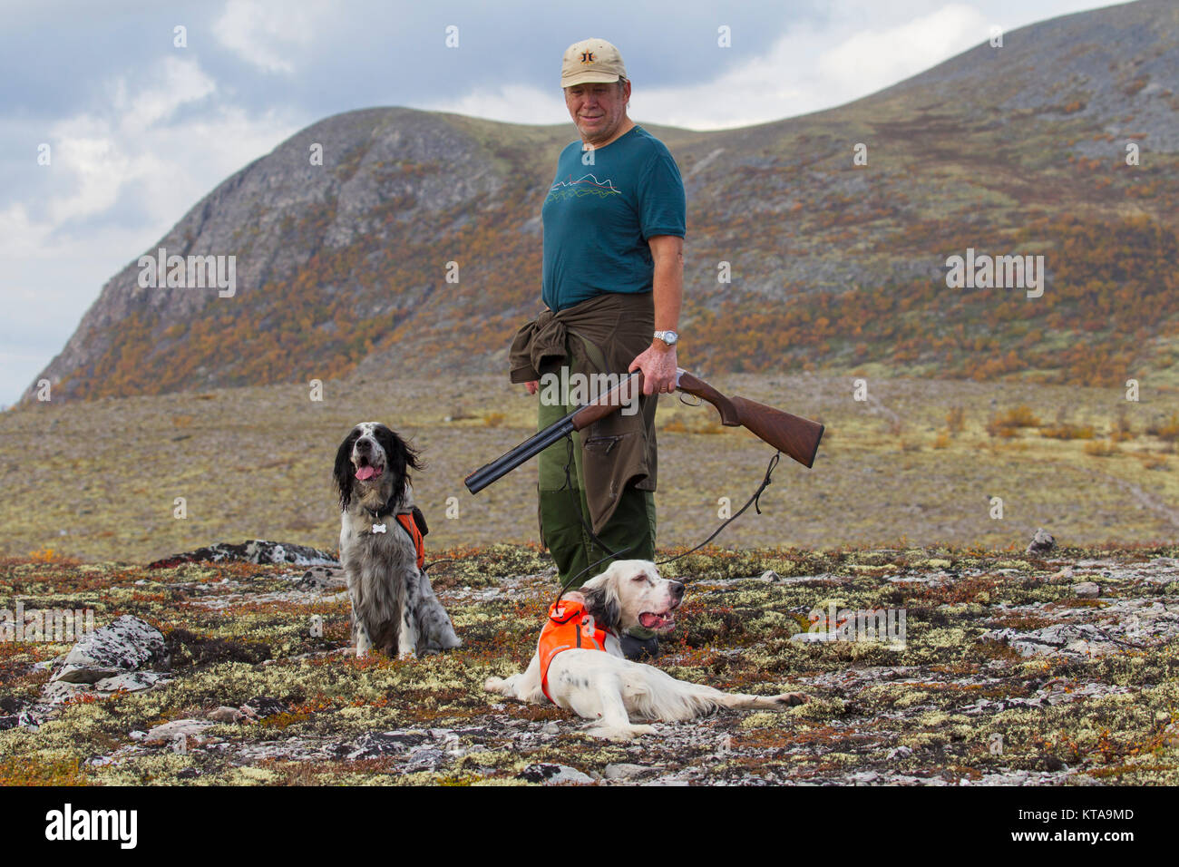 Norwegian hunter with shotgun and two English Setters hunting grouse on the tundra in autumn, Norway - Stock Image