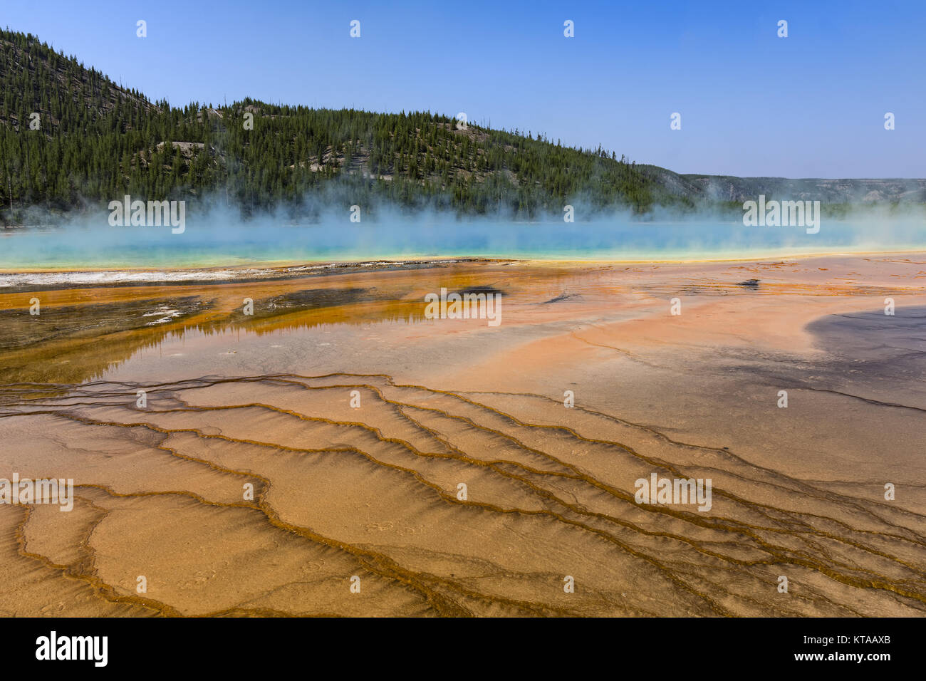 The colrful Grand Prismatic Spring at Yellowstone National Park Wyoming USA against a blue sky - Stock Image